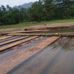 Polres Aceh Timur Amankan Ratusan Batang Kayu Olahan